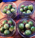 Spicy Pickled Cherry Tomatoes - ready for brine and the canner!