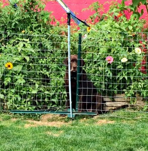 This is NOT the side of the fence she's supposed to inhabit.